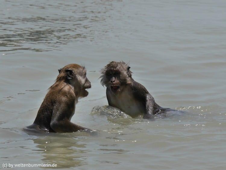 monkey_beach_07